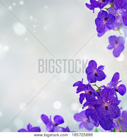 Bunch of fresh blue orchid flowers frame over gray bokeh background