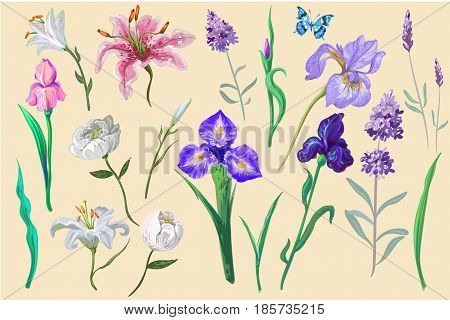 flowers collection for different design isolated stock vector with elements of design