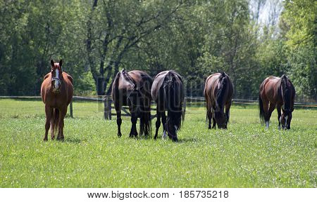 A herd of horses loosely grazing on a meadow