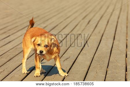 Lovely Dog Playing Outdoor Alone.