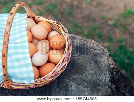 full basket of fresh chicken eggs standing on a wooden stump