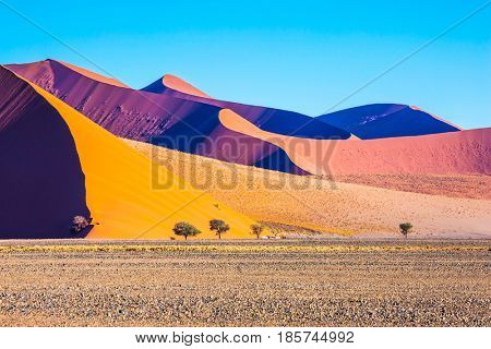 Travel to Namibia. Namib-Naukluft National Park. Fancifully curved sharp crests of orange dunes