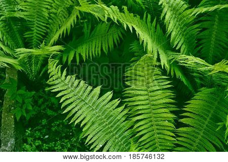 Green leaves of the fern against the background of the summer landscape.