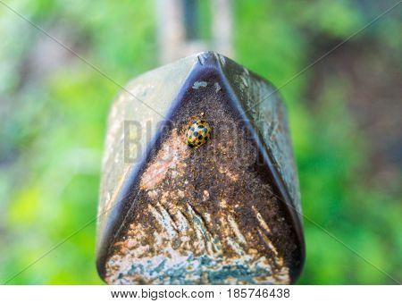 Close-up og a little Ladybird. Lady Beetle. Ladybug.