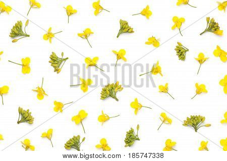 Rapeseed flowers isolated on white background. Flat lay. Top view