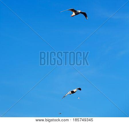 In Oman The Sky   Of Birds