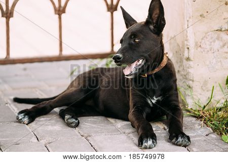 Funny Black Small Size Mixed Breed Puppy Dog Resting Outdoor In Shadow Of Old Building Wall