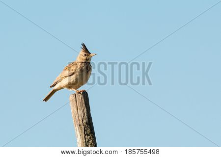 Beautiful bird on a stick with the sky of background