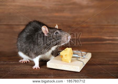 Cute rat and mousetrap with cheese on wooden background