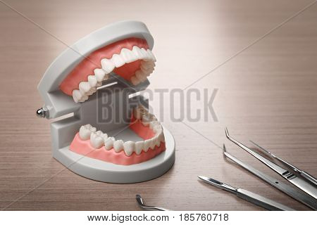 Dental jaw model and tools on wooden background