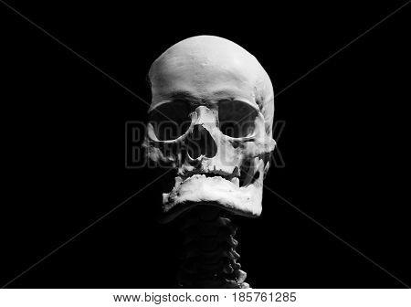 Real skull human skeleton 100%real isolated black