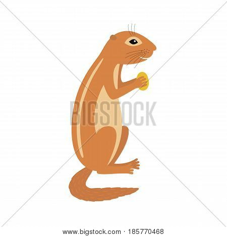 Xerus African ground squirrel holding nut animal cartoon character isolated on white background.