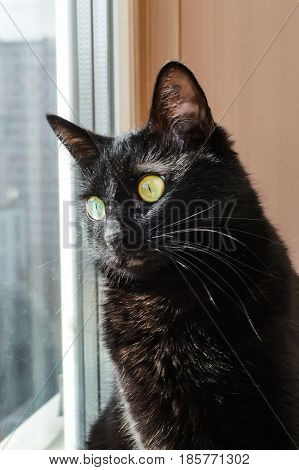 black cat sits on the sill and looking out the window