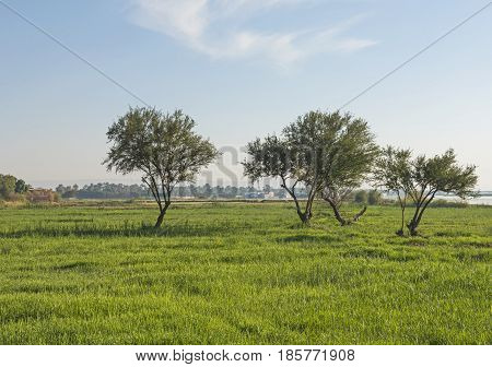 Trees In A Rural Countryside Meadow In The Summer