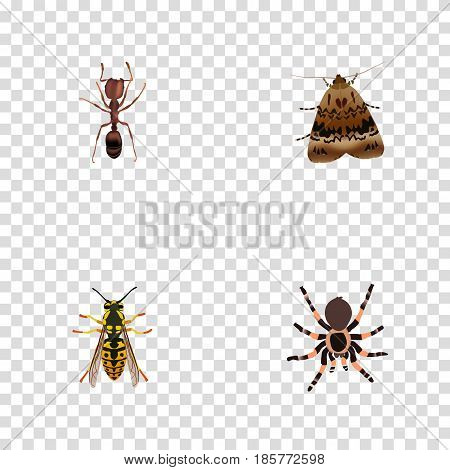 Realistic Butterfly, Bee, Emmet And Other Vector Elements. Set Of Animal Realistic Symbols Also Includes Arachnid, Fly, Sting Objects.
