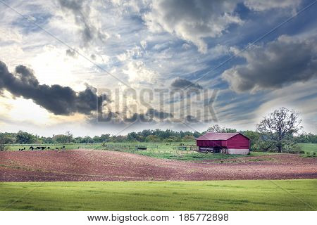 Springtime on a Maryland farm with cows red barn and plowed field