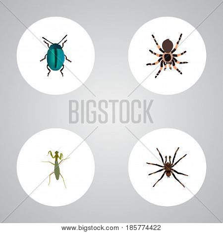 Realistic Arachnid, Tarantula, Bug And Other Vector Elements. Set Of Hexapod Realistic Symbols Also Includes Blue, Grasshopper, Spider Objects.