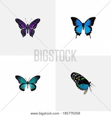 Realistic Polyommatus Icarus, Common Blue, Pipevine And Other Vector Elements. Set Of Beautiful Realistic Symbols Also Includes Cypris, Butterfly, Violet Objects.
