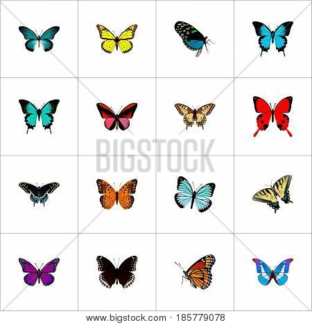 Realistic Danaus Plexippus, Morpho Hecuba, Archippus And Other Vector Elements. Set Of Moth Realistic Symbols Also Includes Red, Monarch, Sky Objects.