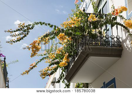 Red flowers on balconies of white houses of a resort city under a bright sun