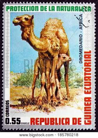 EQUATORIAL GUINEA - CIRCA 1974: a stamp printed in Equatorial Guinea shows Dromedary Camelus Dromedarius Animal circa 1974