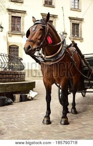 The horse costs on a cobblestone road of the aged city. The horse is intended for transportation of tourists.