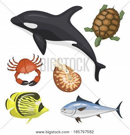 Set of different types of sea animals illustration tropical character wildlife marine aquatic drawing colorful fish. Aquarium ocean cartoon underwater nature cute exotic art fauna.
