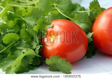 Fresh healthy ripe red tomato with green coriander leaves