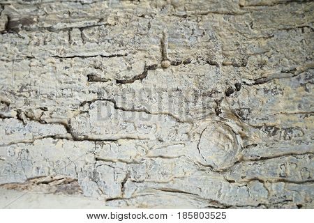 Tree bark abstract texture background close up detail