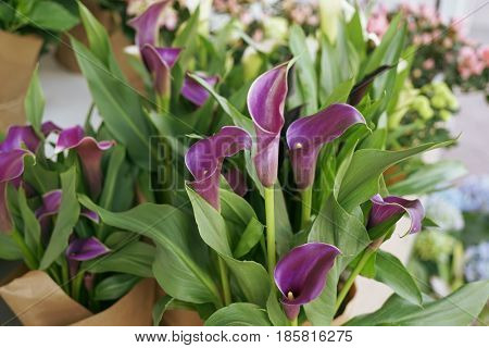 Beautiful calla flowers in shop