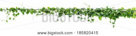 Vines On Poles, Plant On White Background