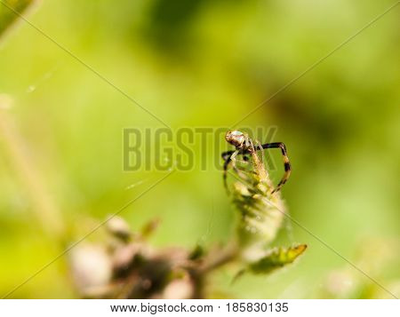 Close Up Macro Of A Spider On Top Of A Leaf With Legs And Body In Detail