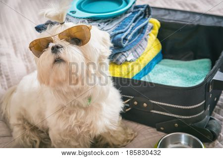 Small dog maltese sitting next to the suitcase or bag wearing sunglasses and waiting for a trip