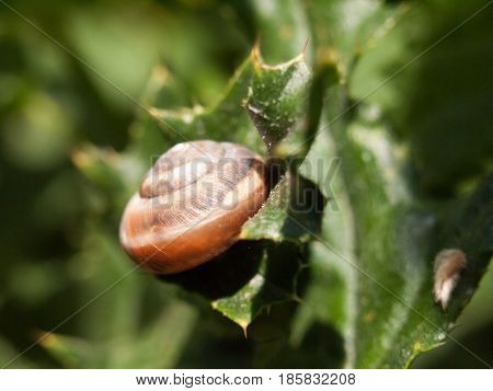 A Snail Shell Attached To A Leaf Outside In Clear Detail In The Forest Macro