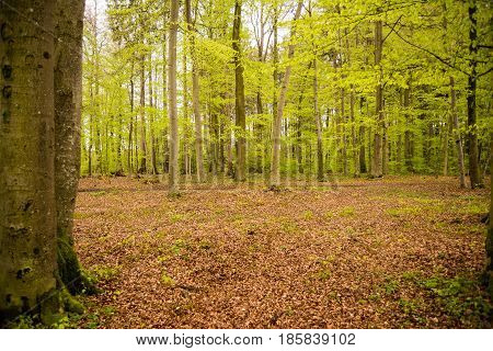 Wideangle view of a forest in Germany