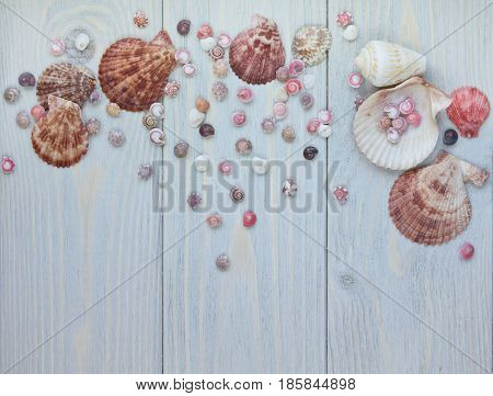 Marine items on blue wooden background. Top view of scallop shells.
