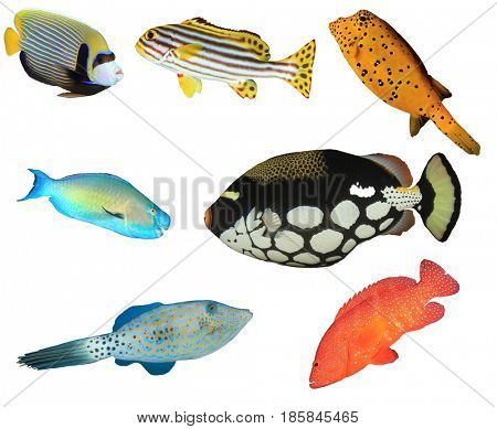Tropical fish isolated on white background.  Angelfish, Sweetlips, Boxfish, Parrotfish, Triggerfish, Filefish, Grouper fish
