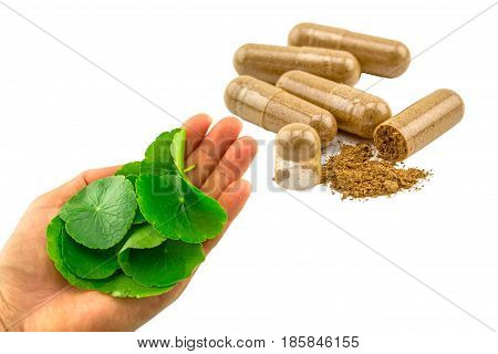 Green Centella asiatica in hand with colorful pill on white