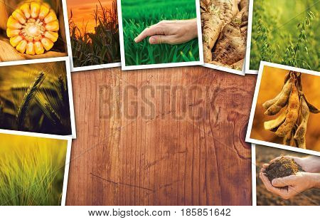 Agriculture themed collage photos with copy space - crops farming and growth