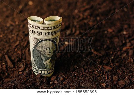 USA dollar banknotes cash money in fertile soil ground making income in agriculture and agricultural activity like growing crops