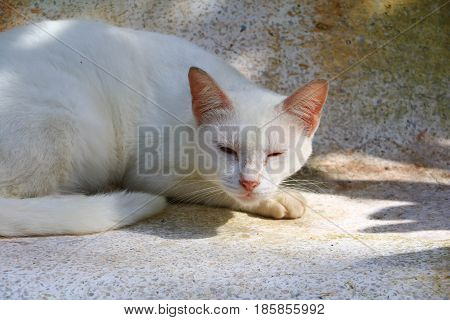 alonle white  cat on outside house .