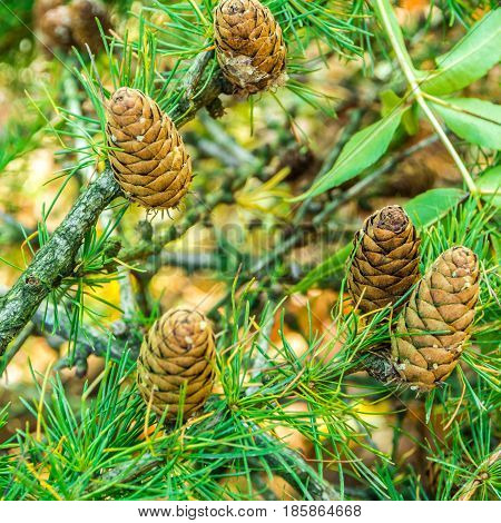 view of brown pinnacles on green conifer