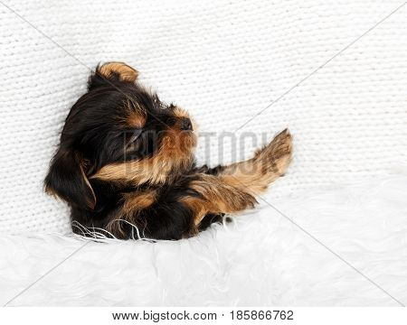 puppy sleeping on a white background. doggy