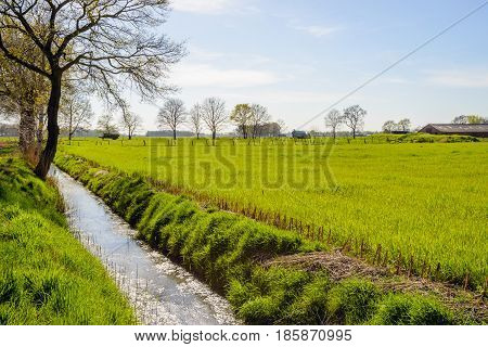Agricultural landscape in the Netherlands with a small ditch diagonal in the image and bare trees against a sunny blue sky.