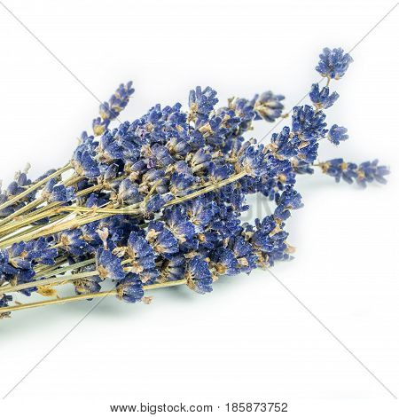 closeup look of lavander on white background