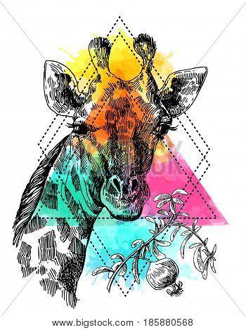 Beautful hand drawn illustration portrait of giraffe. Sketch style. Watercolor background.