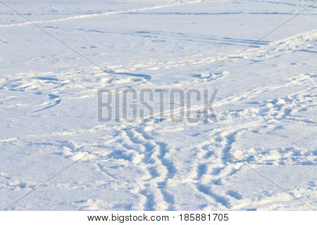 Many footprints are on white fresh snow at sunny winter frost day