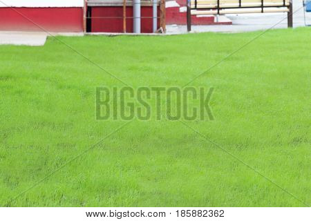 Beautiful clean lawn grass is bright green near the house neatly trimmed