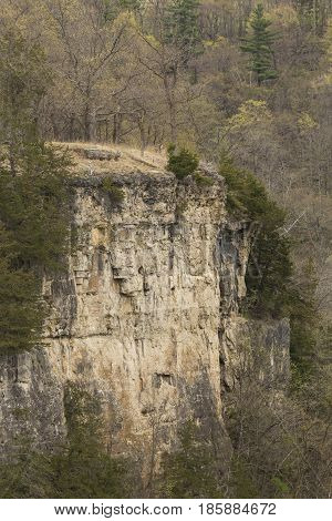 A cliff in the woods during spring.