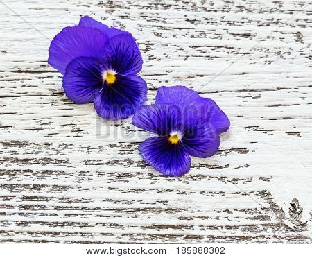 the violet flowers on old wooden background